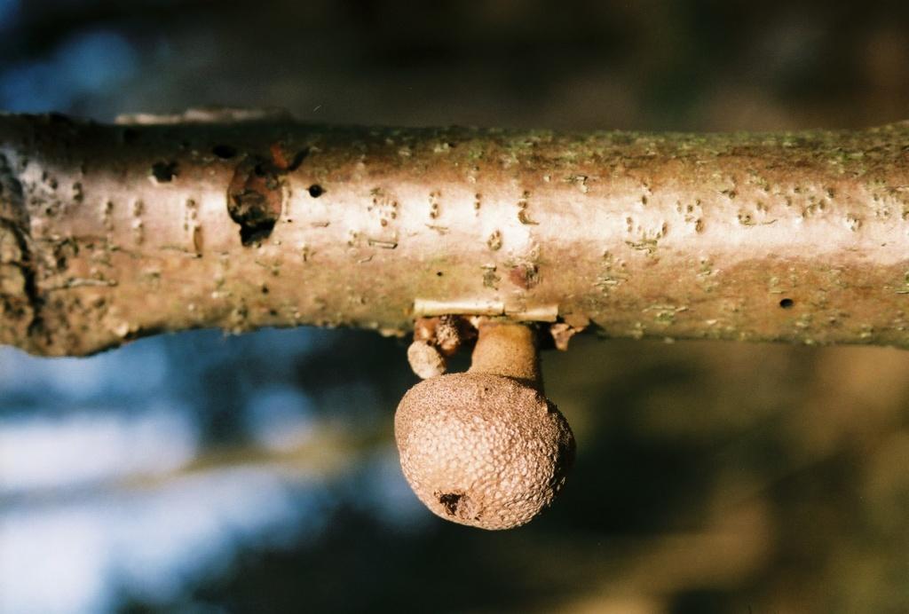 Тайны грибов