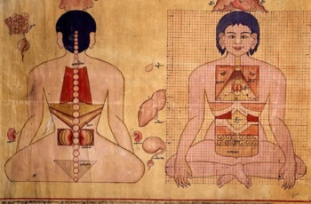 Сила трав в тибетской медицине. Лекарственные растения. Описание